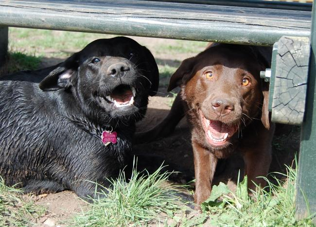 Herlev 080407 088red